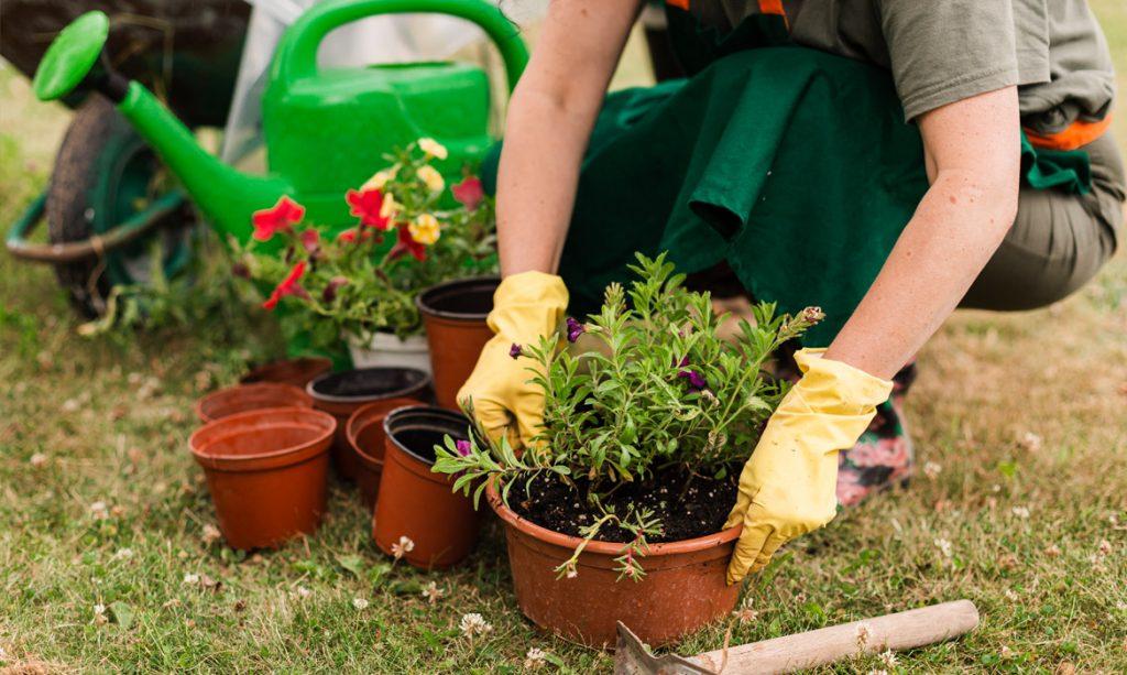 מטפלים בגינה