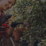 איך לגדל צמחים מאושרים