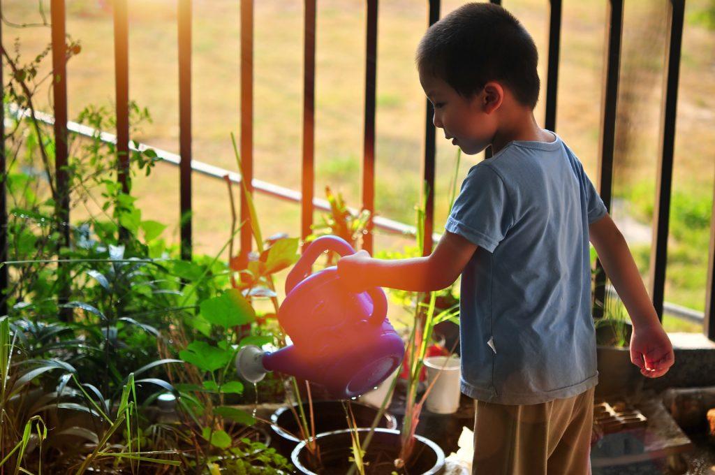ילד משקה צמחים