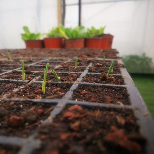 זרעים חדשים